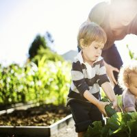 Build Raised Bed Gardens With Your Stapleton Neighbors – Here Is How!