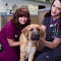 Northfield's Animal Hospital has Heart