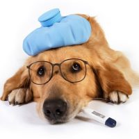 The Facts About Kennel Cough