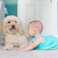 How to Prepare Pets for a Baby