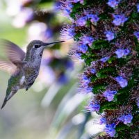 How to Attract Hummingbirds to Your Colorado Yard