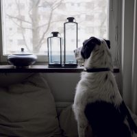 Please Don't Go: Preventing Post-Quarantine Separation Anxiety in Your Dog